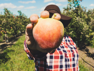 The 2021 Georgia Apple Festival - Fun, Food, History, and Culture