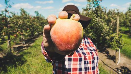 Granjero con fruta