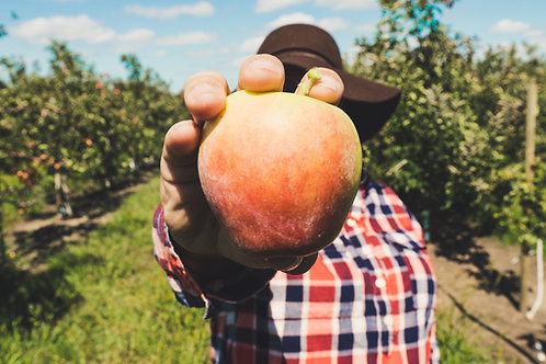 Apples - eating