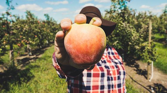 BC Fresh Fruits