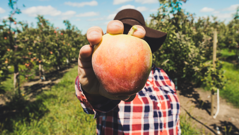 Basic Fruit Tree Pruning