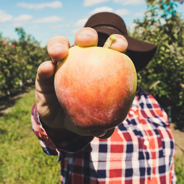 Landwirt hält Obst