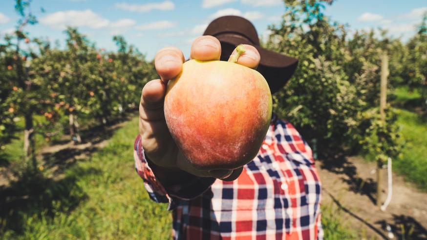 Meyve tutan çiftçi
