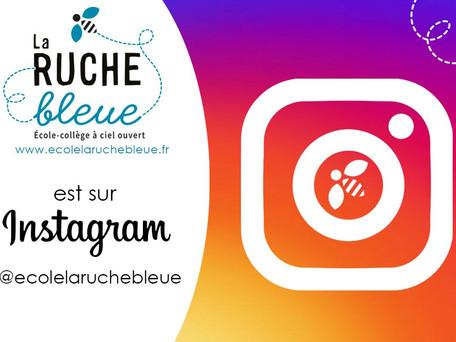 La Ruche Bleue est sur Instagram