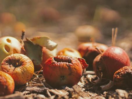 Desperdício alimentar – o desafio