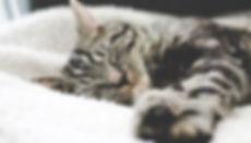 tabby asleep left erik-jan-leusink-24897