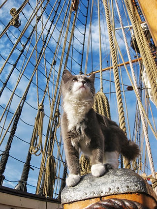 ship cat ditty angelac-393413367-deviant