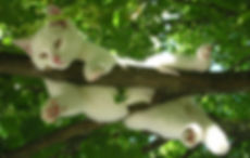 white cat relax in tree V traumfaenger-2