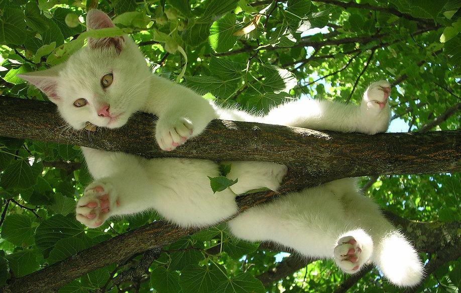 white cat relax in tree V traumfaenger-2