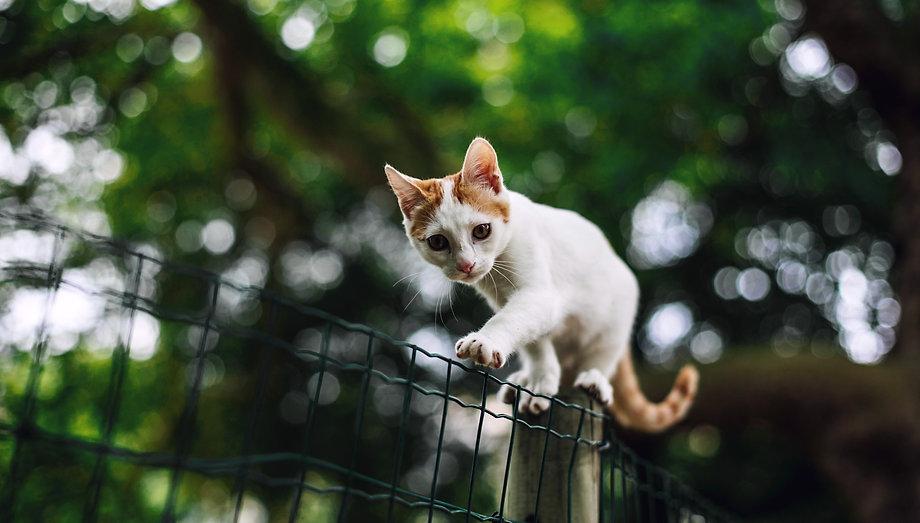 white kitten exlplore erik-witsoe-712604