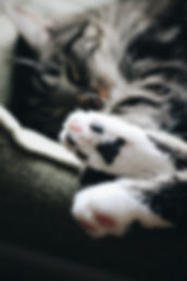 toe beans asleep erik-jan-leusink-555169