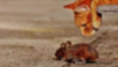 mouse cat watch-Alexas_Fotos-1907494_192