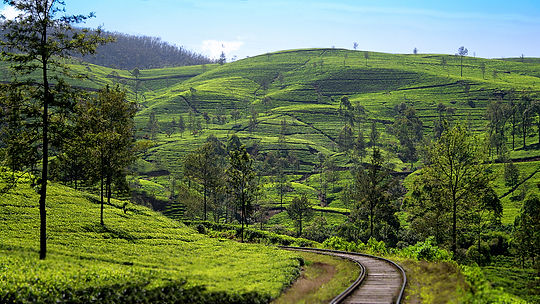 The Planters House - Sri Lanka - Tea Estate Boutique Hotel - Train