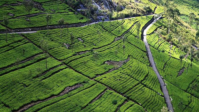 The Planters House - Sri Lanka - Tea Estate Boutique Hotel - Drving Directions