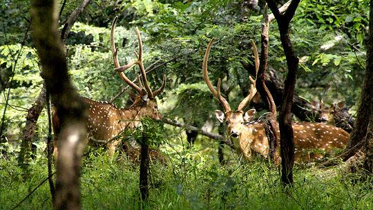The Planters House - Sri Lanka - Tea Estate Boutique Hotel - Monarakanda Estate - Deer