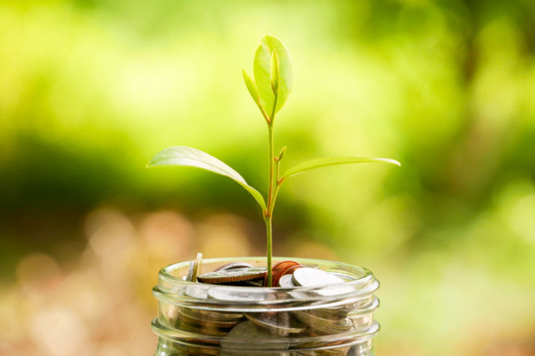 save-money-investment-concept-plant-grow