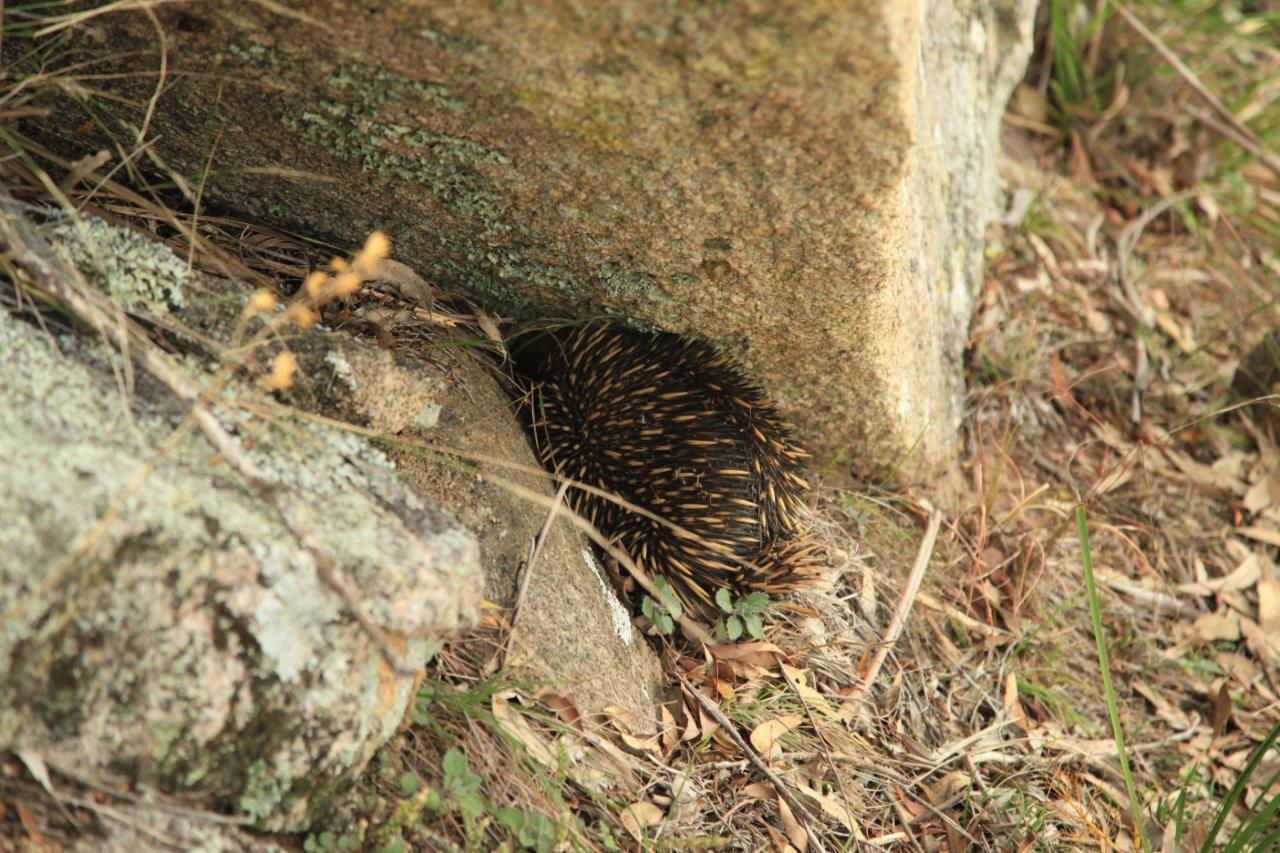 Abundant wildlife - Encounters some of Australia's most curious natives in their natural environment.