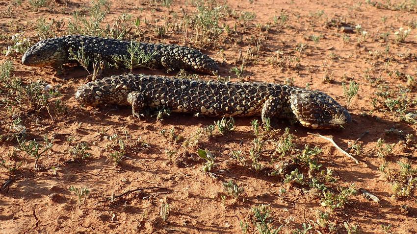 Gone Bush Adventures outback leadership