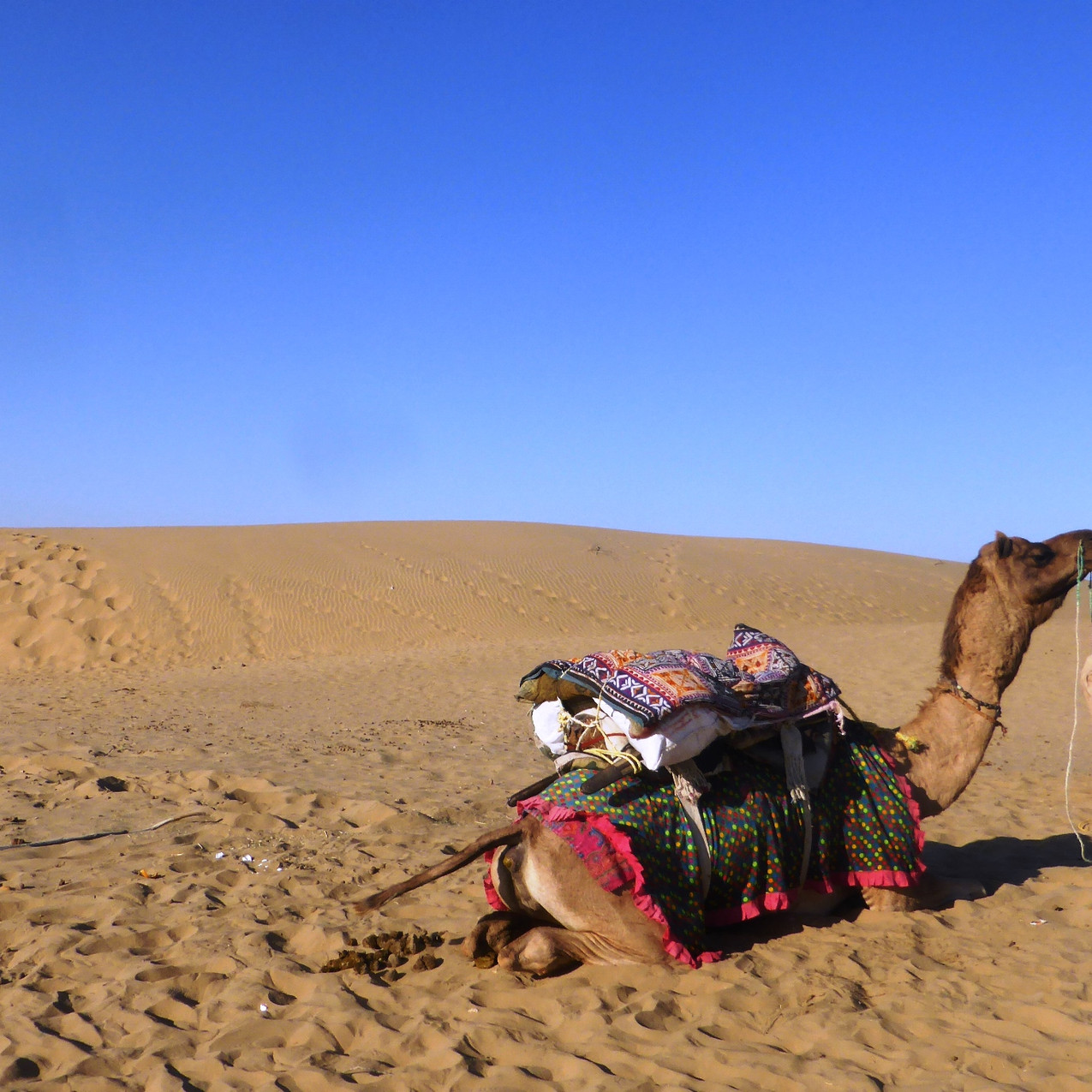 Yes - there will be camel rides!