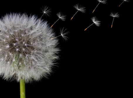 Tipps gegen Heuschnupfen: Wie Ayurveda dir helfen kann
