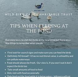 Pond Feeding Tips MWV.jpg