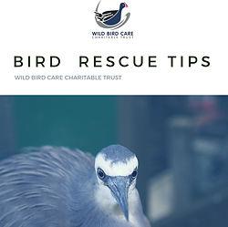 eBOOK BIRD RESCUE TIPS.jpg