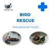 BIRD RESCUE TIPS.png