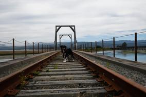 Bear on bridge in Oregon