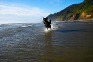 Bear at Oregon Beach