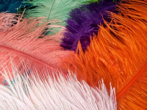 Ostrich Feathers Variety Pack (10 pcs)