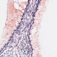 coupe histologique Histalim