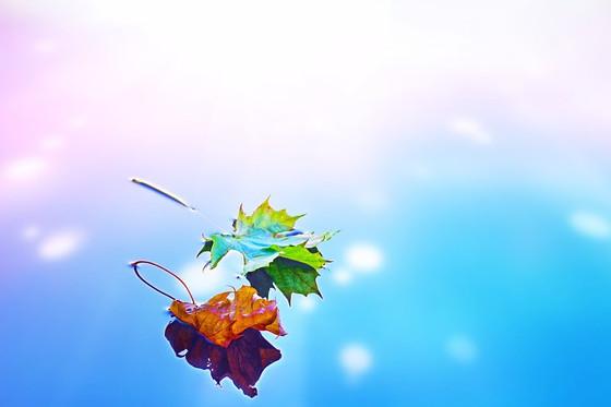 Autumn Awareness