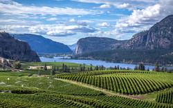 Okanagan Vineyards.jpg