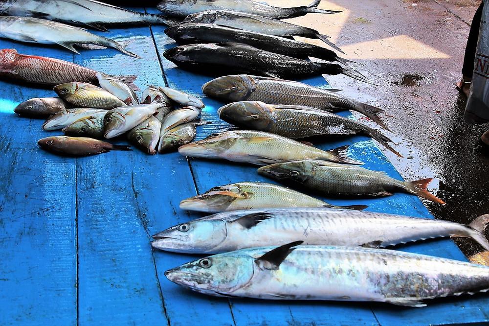 fresh fish caught today at sfinari restaurant