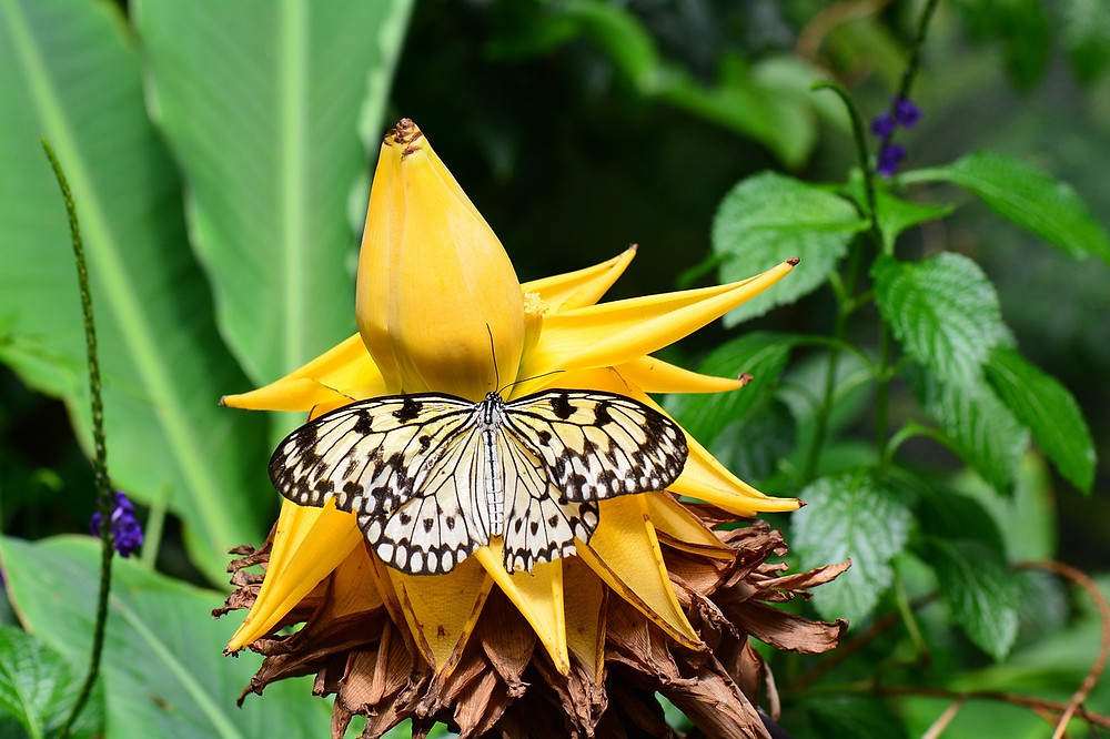 butterfly on exotic flower in crete