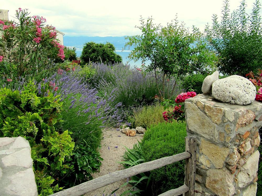 mediterranean herbs garden