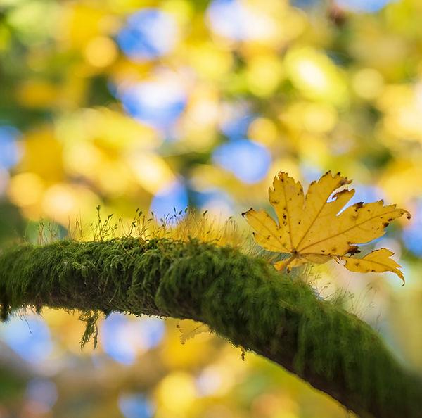 Moss and Autumn Leaf