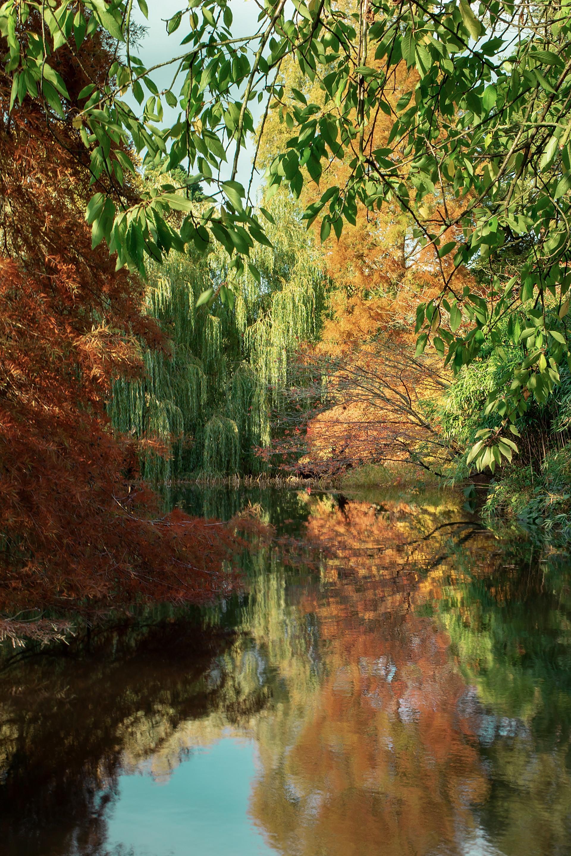Cambridge Botanic Garden.jpg