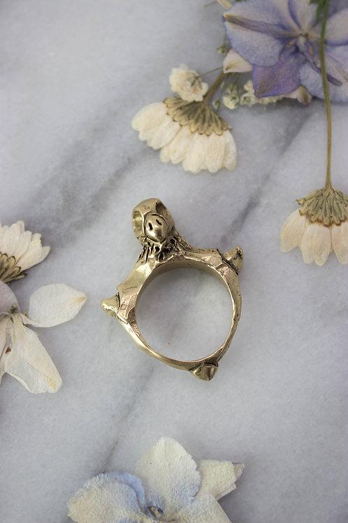 Columbidae Ring