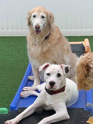 dog resort in pineville nc