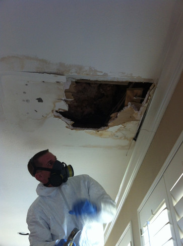 mold remediation company dallas