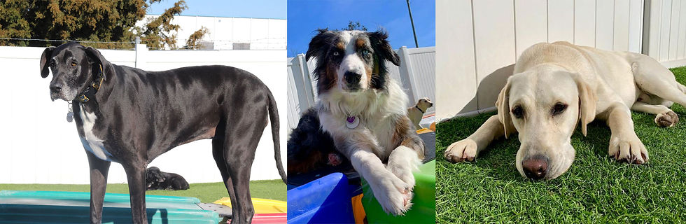 doggie day care membership charlotte NC