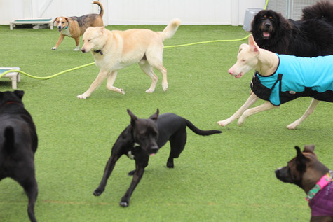 fun dog day care pineville nc