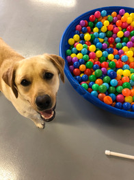 Doggie day care ball pit
