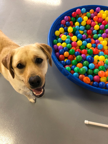 Dog and ball pit at doggy day care