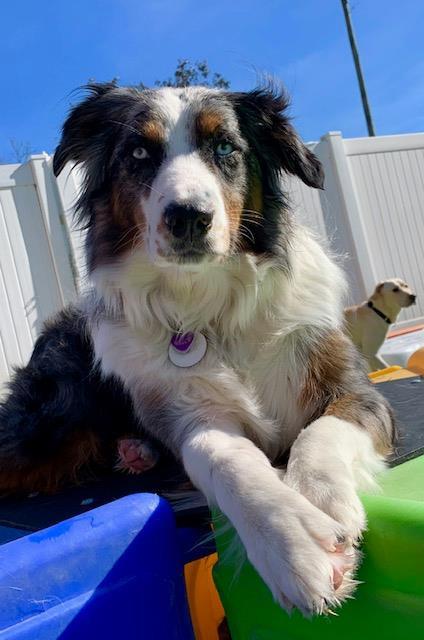 dog boarding pineville nc