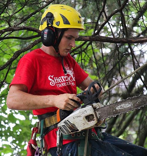 tree services lawrence ks