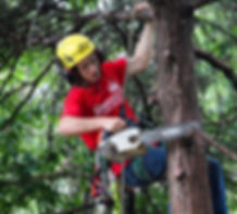 tree disease prevention, trimming and pruning services