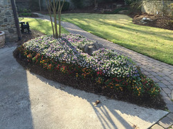professional landscape planting