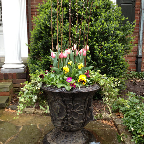 large potted spring plants